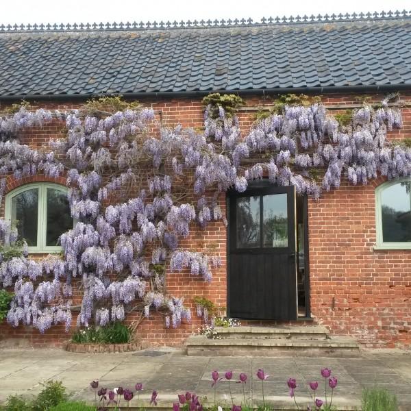 Wisteria-Granary courtyard